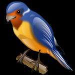 swallow_bird