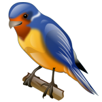 swallow_bird